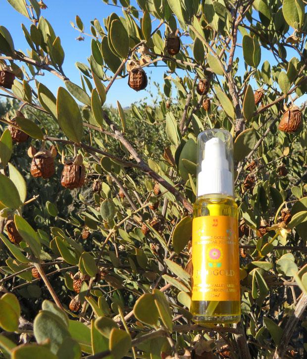 ♔ 神秘の植物 原種ホホバ種子油