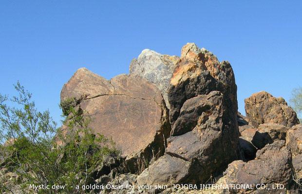 ♔ 原種ホホバの聖地アリゾナ州ハクアハラヴァレー環境保護区域内のペトログリフ