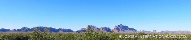 古代ホホカム族が定住農業をしていたと云われるアリゾナ砂漠の広大な大地の地下源泉は、アクアカリエンテの鉱泉が流れており、正にこの場所は砂漠のオアシスと言えます。私達のホホバオイルは、ハリウッドスターも内密で通ったと云われる温泉水・アクアカリエンテの美のマジック鉱泉で潤った高品質を誇るアリゾナ州原産砂漠の神秘の植物原種のゴールデンホホバオイルです。世界遺産グランドキャニオンの自然浸食によって流れ来るコロラドリバーの豊富な天然ミネラル成分を含む灌漑用水と褐藻のオーガニッック肥料で栽培しています。