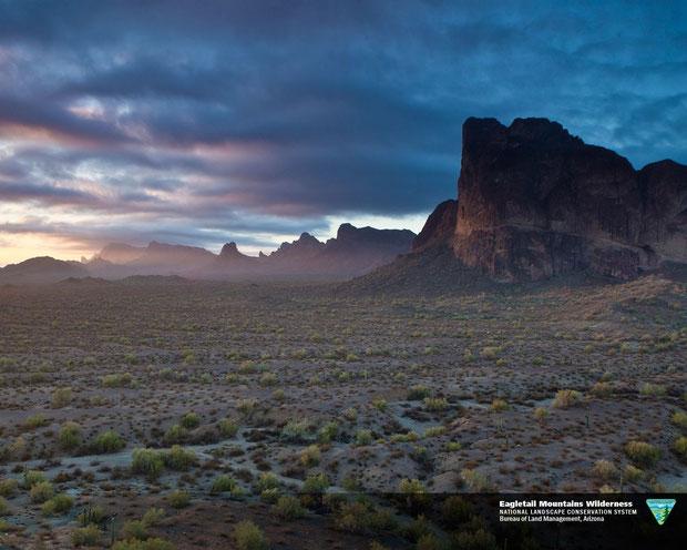 ❦ オブライエンズご夫妻が政府に寄付されたアリゾナ州イーグルテールマウンテン環境保護区のイーグルテール山の麓でアリゾナ州原産の原種ホホバ(純粋種Sayuri原種ホホバ)が生長しています。太古よりの風景がそのまま大切に保護されています。【お写真: National Conservation Lands by U.S. DEPARTMENT OF THE INTERIOR】