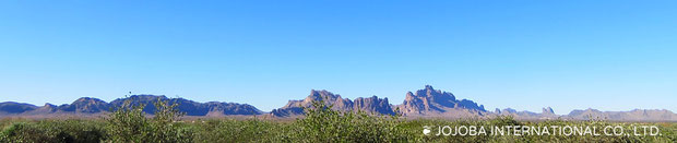 アリゾナ砂漠の広大な大地ハクアハラヴァレーの地下源泉は、アクアカリエンテの鉱泉が流れており、正にこの場所は砂漠のオアシスと言えます。私達のホホバオイルは、ハリウッドスターも内密で通ったと云われる温泉水・アクアカリエンテの美のマジック鉱泉で潤った高品質を誇るアリゾナ州原産砂漠の神秘の植物原種のゴールデンホホバオイルです。世界遺産グランドキャニオンの自然浸食によって流れ来るコロラドリバーの豊富な天然ミネラル成分を含む灌漑用水と褐藻のオーガニック肥料で栽培しています。