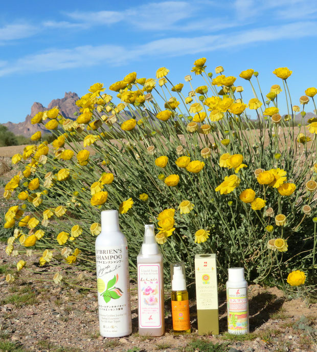 ❦ ホホバシリーズとDesert Marigold Native Wildflower アリゾナ州環境保護地域イーグルテールマウンテンを臨んで