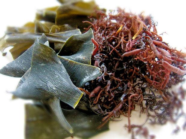 3種の天然海草を原料に、頭皮に一切無害の天然素材