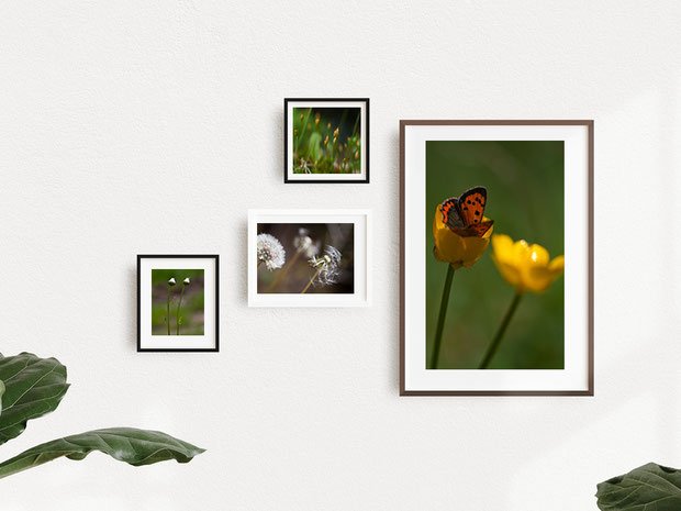 photographie nature en vente