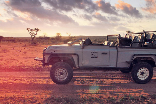 Every day we went on Safari at Siyafunda | Volunteering with Wildlife and Children in South Africa - My Enriching Experience | via @Just1WayTicket