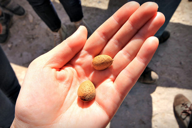 Fresh almonds, picked from the tree. Too bad I didn't had a nut cracker with me. © Sabrina Iovino | JustOneWayTicket.com