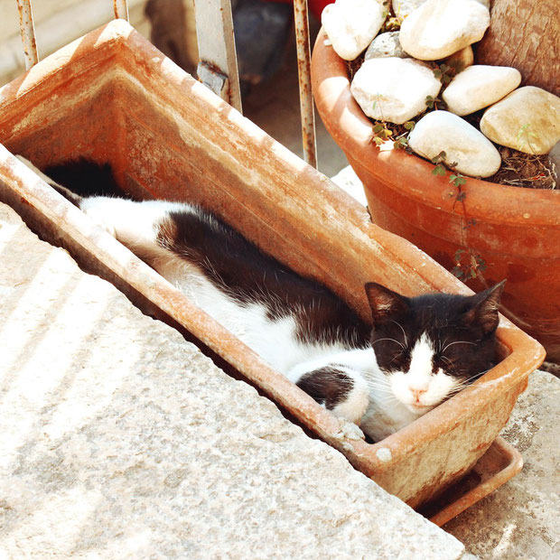 Cats in Turkey | 20 Photos That Will Make You Want To Visit Turkey! | via @Just1WayTicket