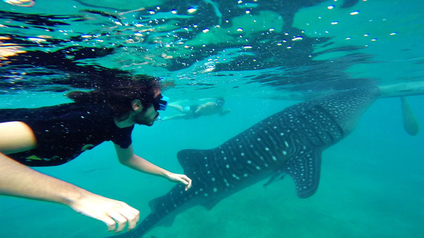 Snorkeling with whale sharks in Oslob | 20 Photos of the Philippines that will make you want to pack your bags and travel © Sabrina Iovino | JustOneWayTicket.com