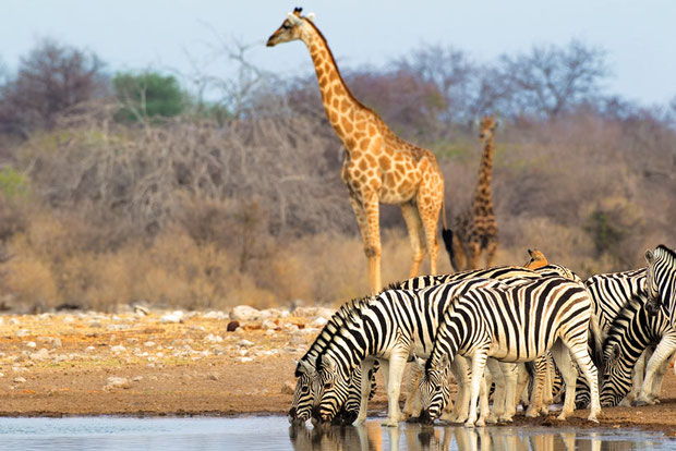 Etosha National Park | Travel Guide To Namibia - Things To Do And Places To Stay | via @Just1WayTicket