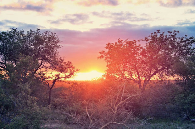 Sunset in the bush of South Africa | Where to find the big 5 - The Ultimate Guide to Wildlife Safari in South Africa | via @Just1WayTicket | Photo © Sabrina Iovino