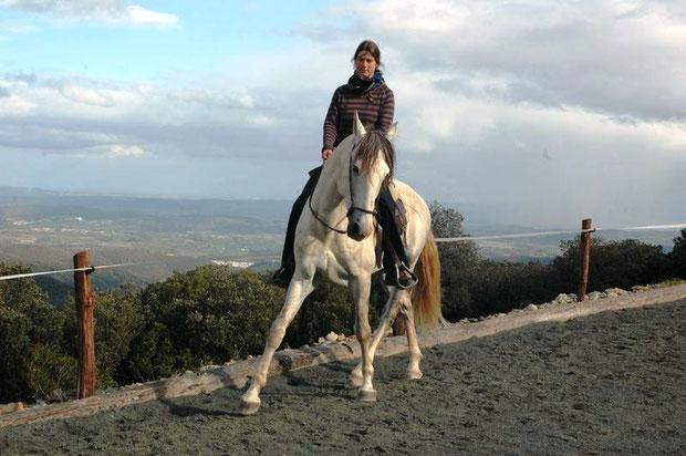 charlotte staemmler travail cheval