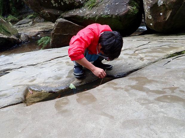 奥西表 仲良川上流のナーラの滝へ