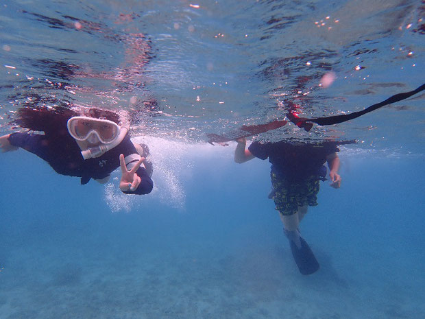 奥西表 舟浮、網取、崎山でのシュノーケル(スノーケル)でサンゴとスズメダイを見る