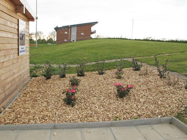 29.3.2012 - Anpflanzungen an der Nordseite (im Hintergrund das Sportlerheim des SV Germania Breklum)