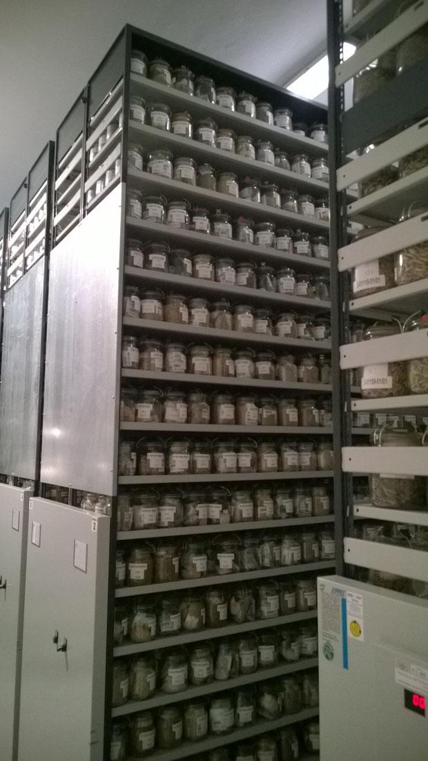 Ca. 150.000 Saatgutmuster lagern in Europas größter Genbank für Saatgut in Gatersleben bei Quedlinburg.