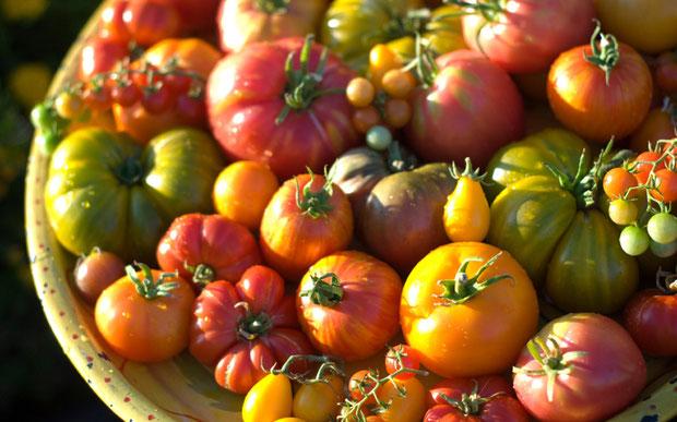 Sortenvielfalt bei Tomaten