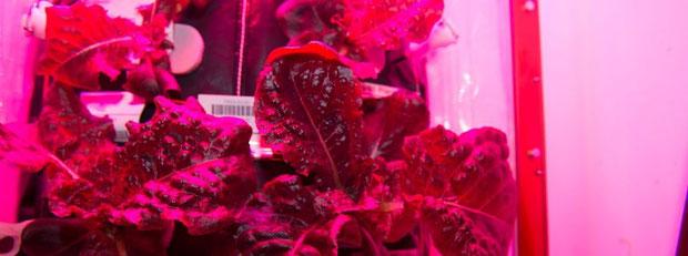 Römersalat auf der Raumstation ISS