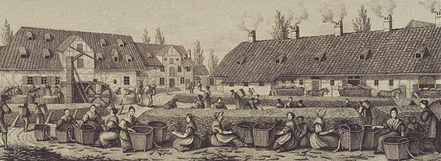 Die Zichorienfabrik Ludwig Otto Bleibtreu im 19. Jahrhundert in Braunschweig