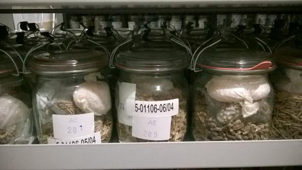 Eingelagertes Saatgut in Weckgläsern.