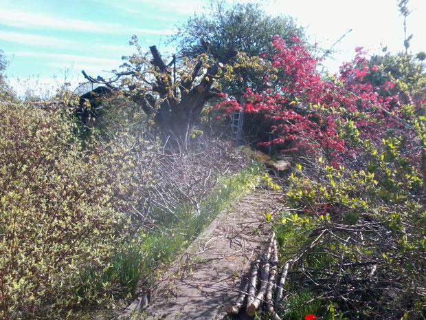 ein Garten nach dem Baumschnitt