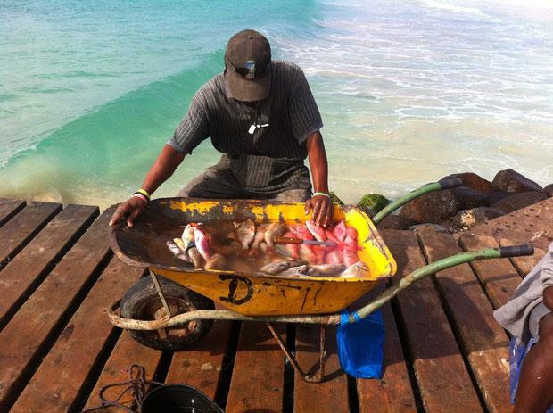 Täglich frischer Fisch am Fischersteg