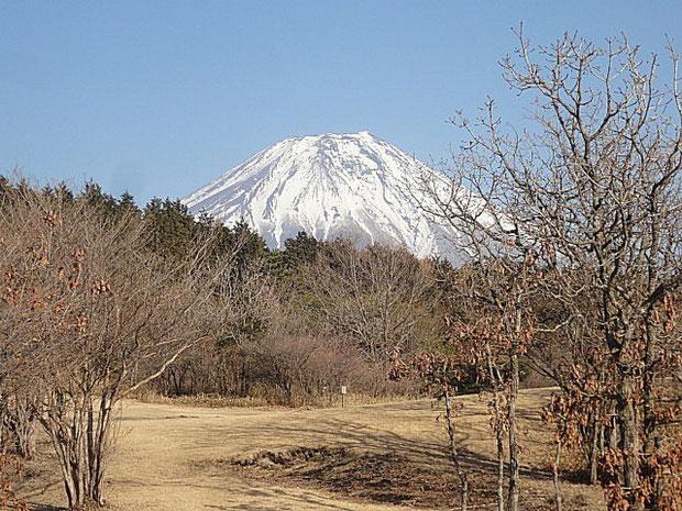 一段下がった奥のサイト。ここから眺めた富士がきれいだ。
