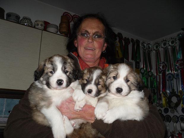 Die sind die Welpen von Alea, 3 zobelfarbene Rüden, die Anfang Januar 2013 alle ein neues Zuhause in meinemWohnort gefunden haben, so bleiben wir alle in Kontakt, was mich sehr gefreut hat.     e