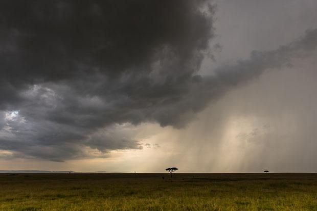 Gewitterstimmung in der Masai Mara in Kenia