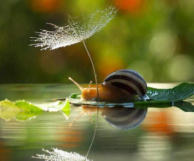 фотографии природы-10