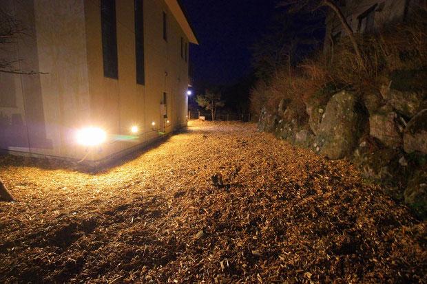 LED照明ナイター