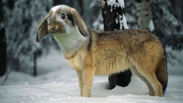 """Wolf/Rabbit"" - BobbiP"