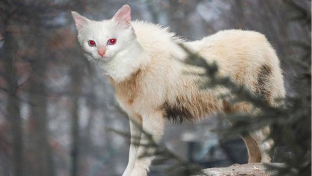 """""""Wolf/Cat"""" - JenniferN"""