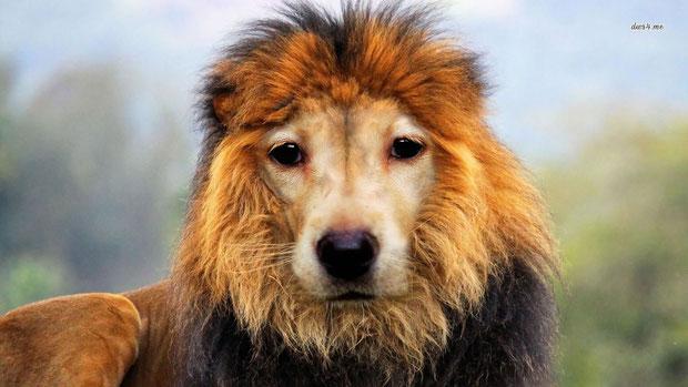 """Lion-Dog"" - CallaM"