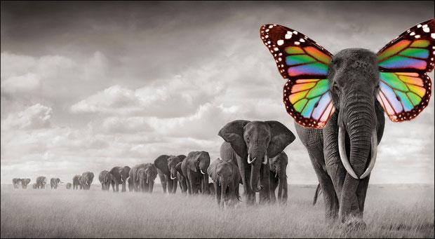 """""""Elephant-Butterfly"""" - KenzieS"""