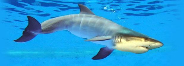 """Dolphin/Shark"" - DarianE"