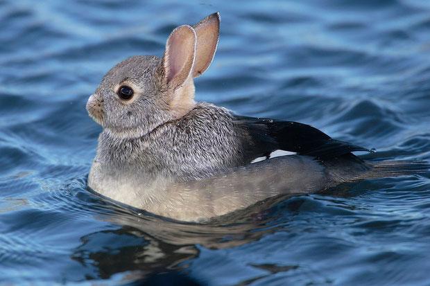 """""""Duck/Rabbit"""" - JulieH"""