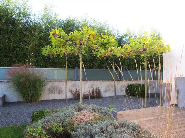 Privater Garten, 2013