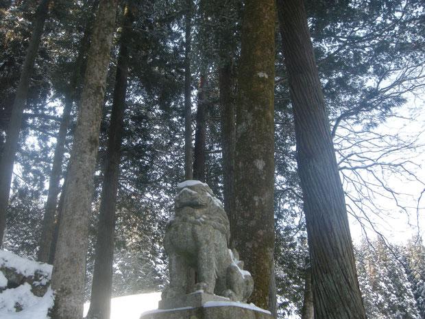 美しい樹並び立つ 左からケヤキ、カヤ、スギ