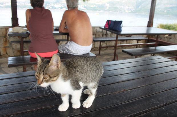 Kätzchen auf Supetar.