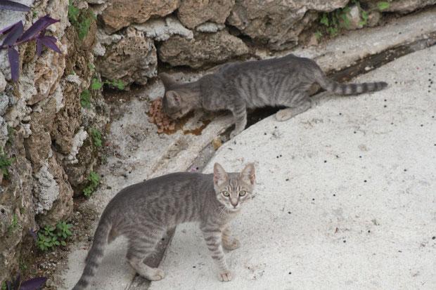 Unsere Hauskatzen ff.