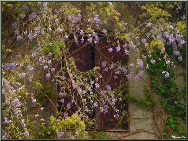Décor fleuri au Château Belle Assice Coureau à St Sulpice de Faleyrens (33) en avril 2012