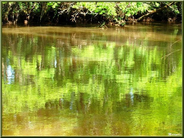 Reflets en bordure de La Leyre, Sentier du Littoral au lieu-dit Lamothe, Le Teich, Bassin d'Arcachon (33)