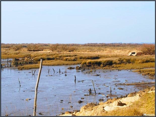 Marécage côté Bassin avec une écluse, Sentier du Littoral, secteur Domaine de Certes et Graveyron, Bassin d'Arcachon (33)