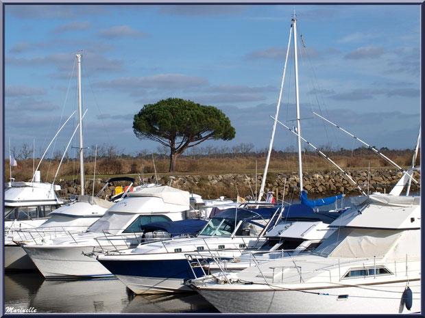 Le petit port de plaisance, Sentier du Littoral, secteur Port du Teich en longeant La Leyre, Le Teich, Bassin d'Arcachon (33)