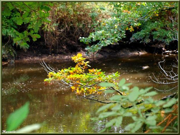 Couleurs d'automne et reflets sur La Leyre, Sentier du Littoral au lieu-dit Lamothe, Le Teich, Bassin d'Arcachon (33)