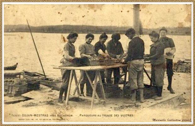 Gujan-Mestras autrefois : parqueuses au triage des huîtres, Bassin d'Arcachon (carte postale, collection privée)