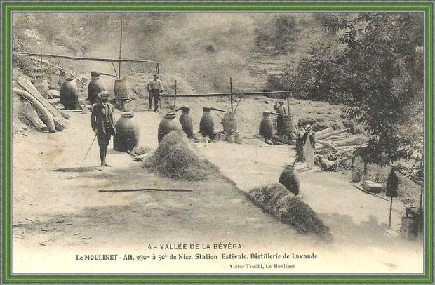 Autrefois... Distillerie de lavande (carte postale - collection privée)