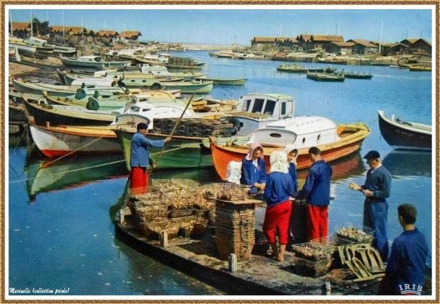 Gujan-Mestras autrefois : Folklore, ostréiculteurs en tenue locale au triage des huîtres sur un chaland dans le Port de Larros, Bassin d'Arcachon (carte postale, collection privée)