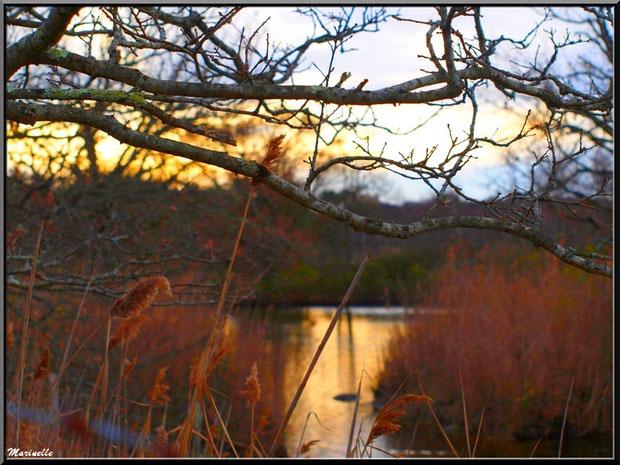 Reflets d'or du soleil couchant sur un réservoir, Sentier du Littoral, secteur Port du Teich en longeant La Leyre, Le Teich, Bassin d'Arcachon (33)