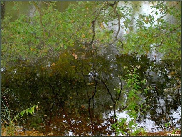 Reflets et ronds de gouttes de pluie sur le Canal des Landes au Parc de la Chêneraie à Gujan-Mestras (Bassin d'Arcachon)